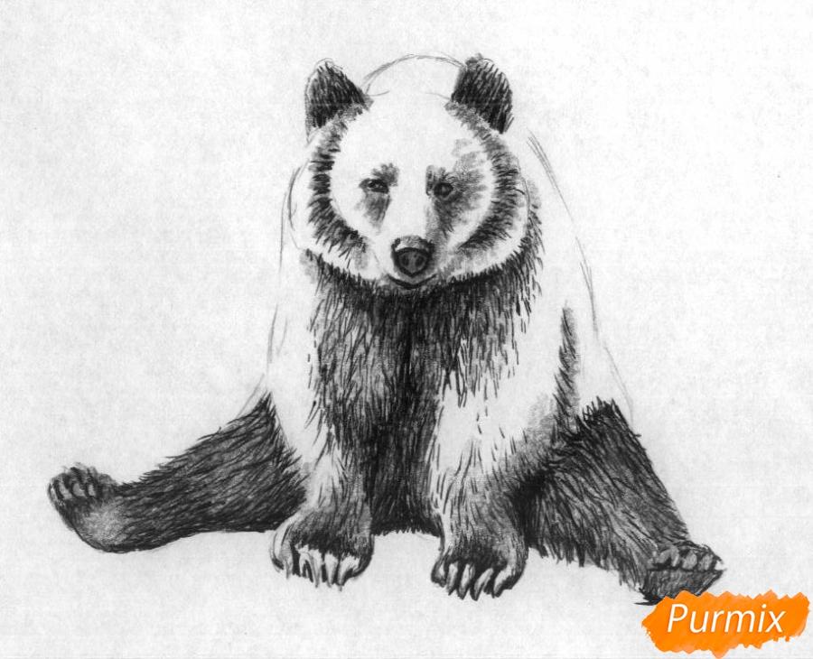 Рисуем сидящего медведя карандашами и чёрной ручкой - шаг 3