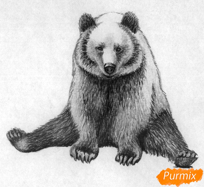 Рисуем сидящего медведя карандашами и чёрной ручкой - шаг 4