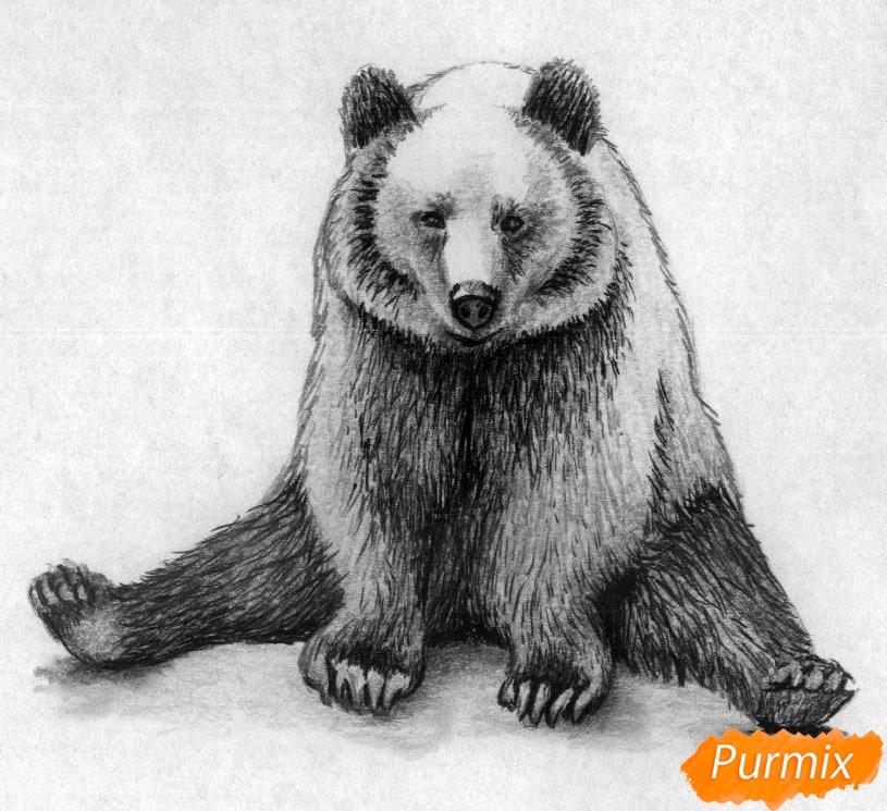 Как нарисовать сидящего медведя карандашами и чёрной ручкой поэтапно