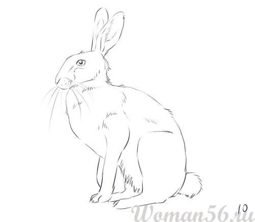 Как нарисовать сидящего зайца карандашом поэтапно