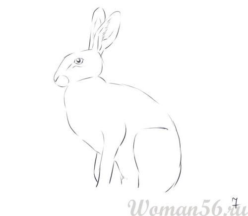 Рисуем сидящего зайца - шаг 7