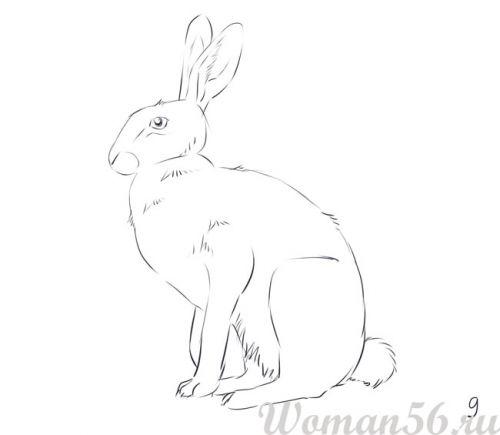 Рисуем сидящего зайца - шаг 9