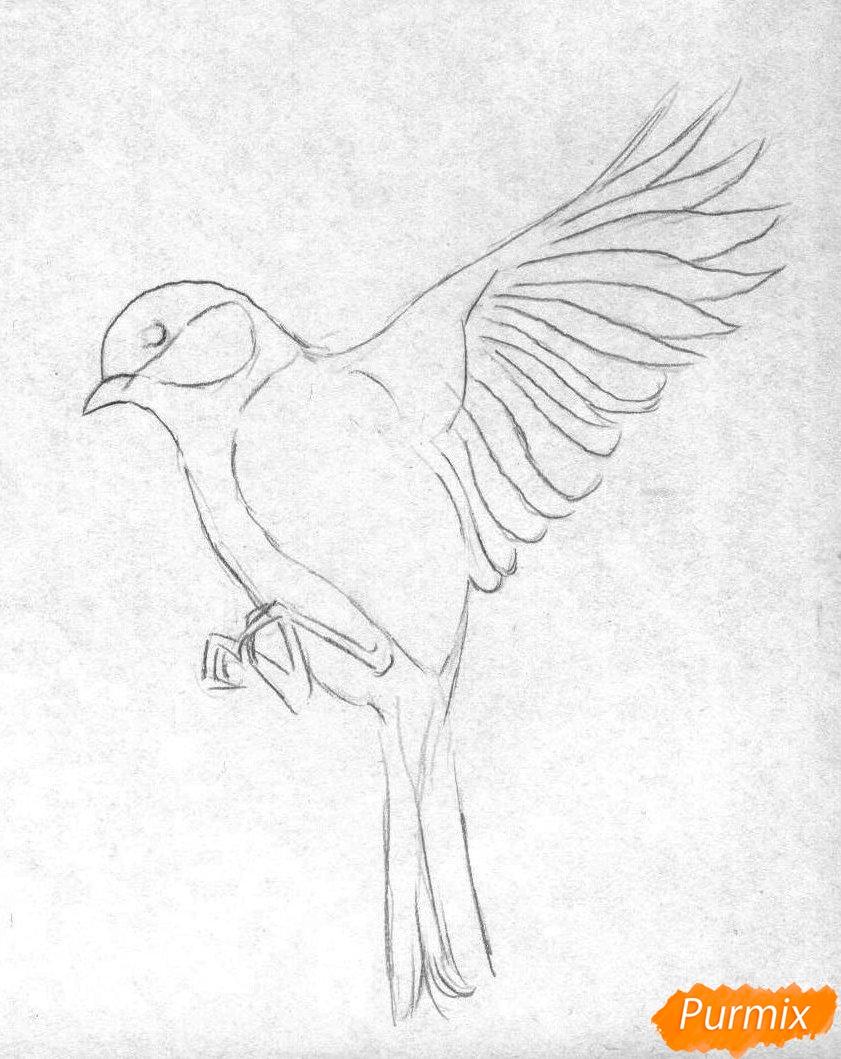 Рисуем синицу в полете карандашами и ручкой - шаг 1