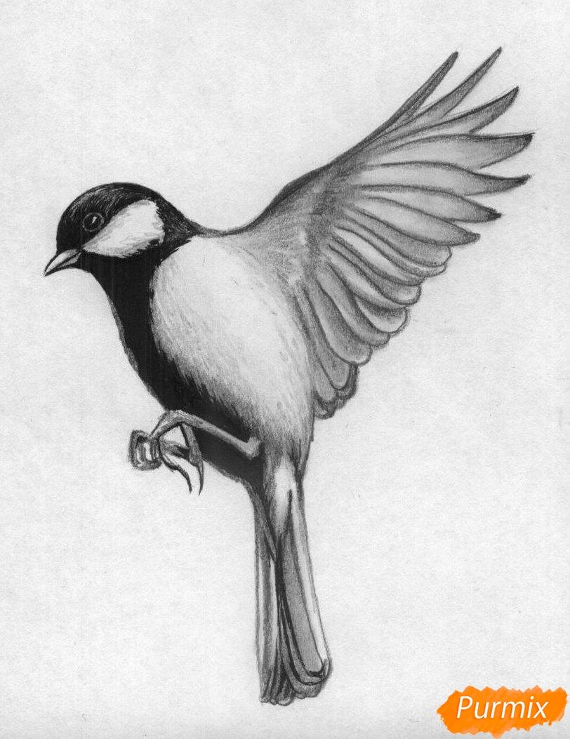Рисуем синицу карандашами или ручкой - фото 4