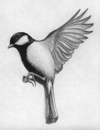 Как нарисовать синицу в полете карандашами и ручкой поэтапно