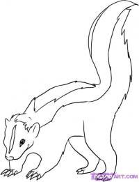 Как нарисовать Скунса карандашом поэтапно