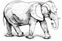 Слона в движении карандашом
