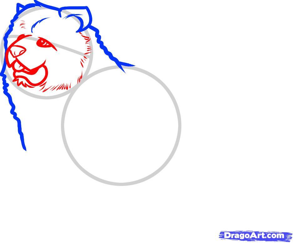 Как нарисовать собаку породы чау чау поэтапно