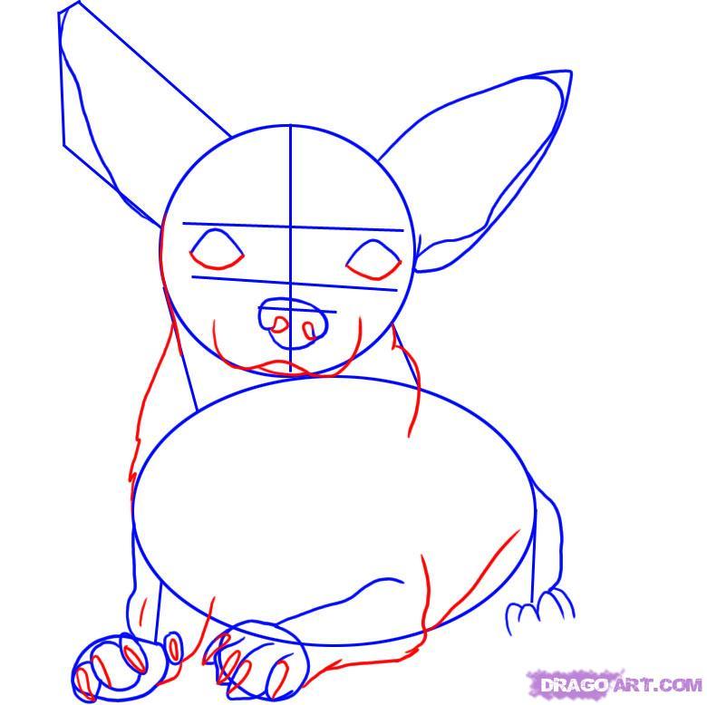 Рисуем собаку чихуахуа - шаг 3