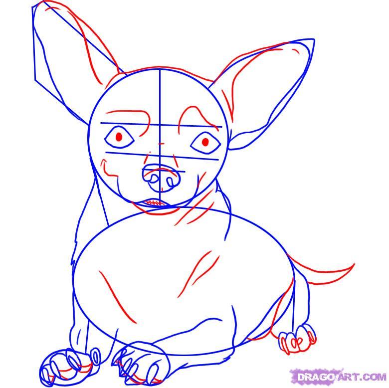 Рисуем собаку чихуахуа - шаг 4