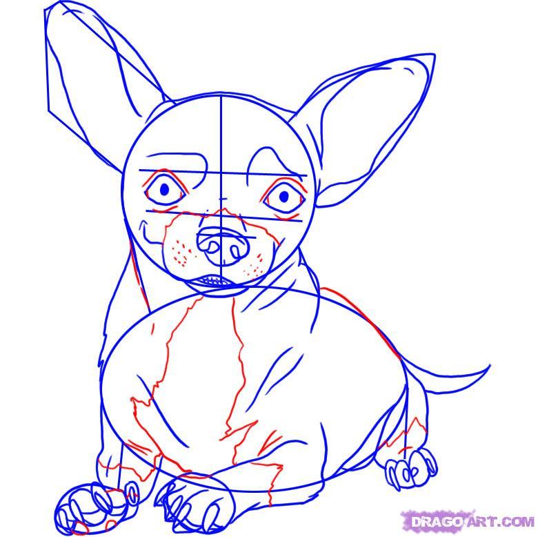 Рисуем собаку чихуахуа - шаг 5