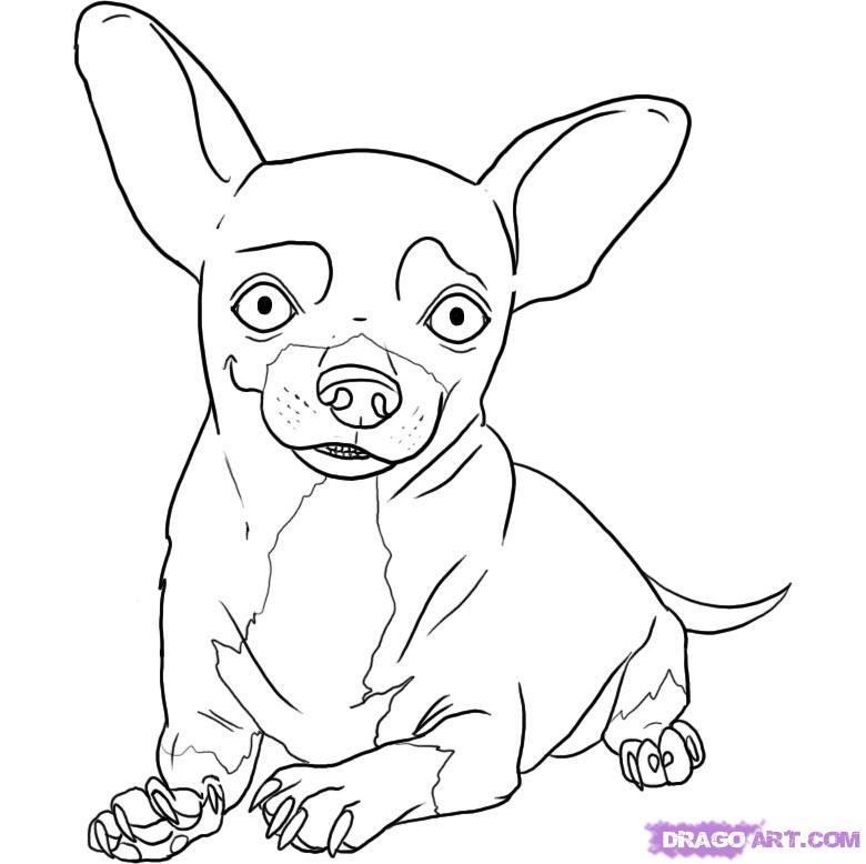 Рисуем собаку чихуахуа