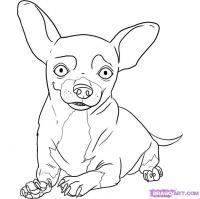 Как нарисовать собаку чихуахуа карандашом поэтапно
