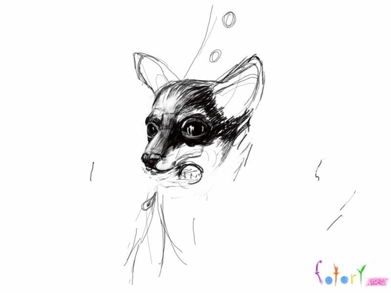 Рисуем собаку чихуахуа в кармане - шаг 3