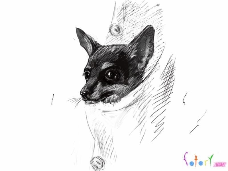 Рисуем собаку чихуахуа в кармане - шаг 5