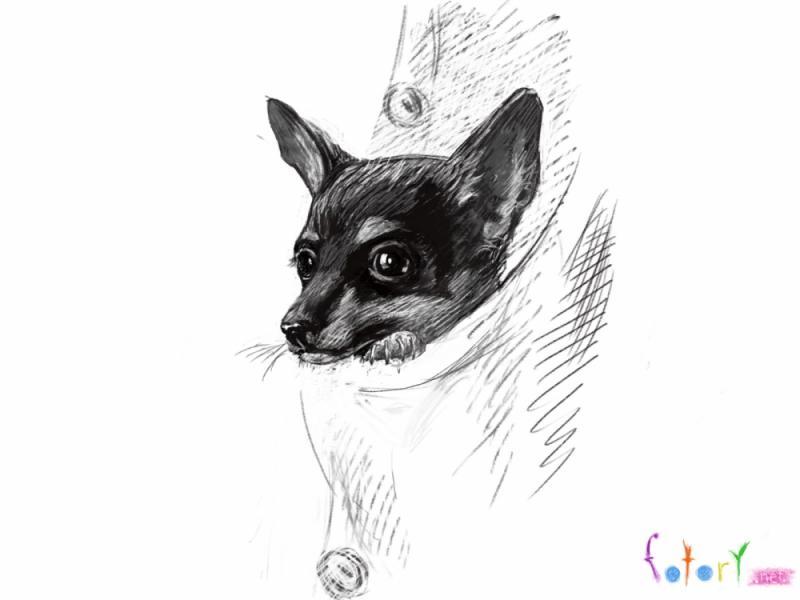 Рисуем собаку чихуахуа в кармане - шаг 6