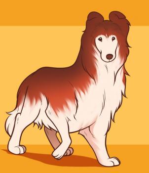 Как нарисовать собаку породы Колли поэтапно