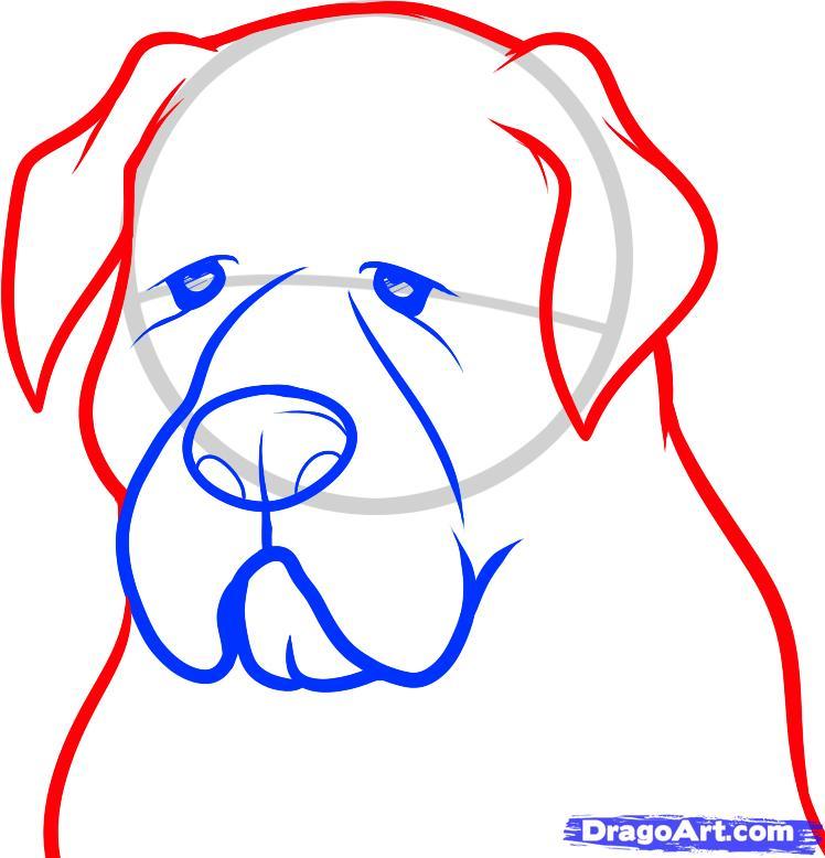 Как нарисовать голову собаки породы мастиф поэтапно