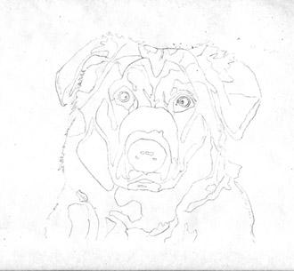 Рисуем реалистичную мордочку собаки - шаг 1