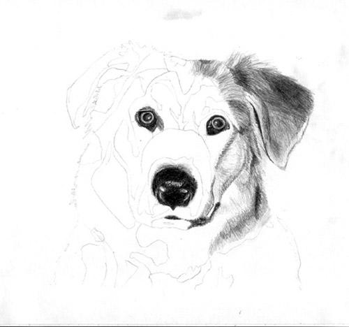 Рисуем реалистичную мордочку собаки - шаг 2