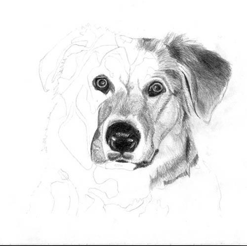 Рисуем реалистичную мордочку собаки - шаг 3