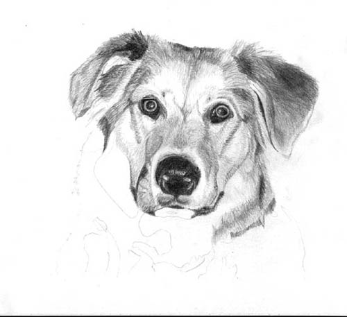 Рисуем реалистичную мордочку собаки - шаг 4