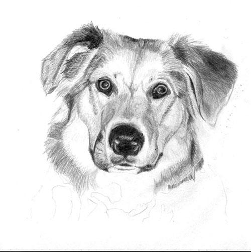 Рисуем реалистичную мордочку собаки - шаг 5