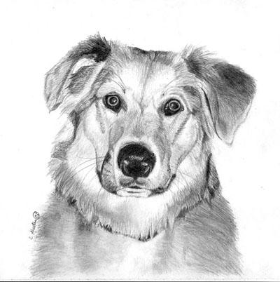 Рисуем реалистичную мордочку собаки - шаг 6