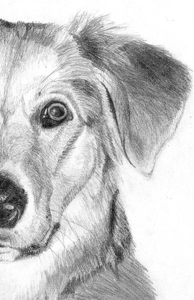 Как нарисовать собаку карандашом поэтапно - Щенок