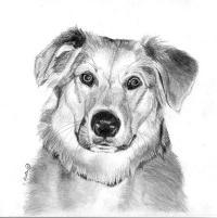 Как нарисовать собаку на бумаге поэтапно
