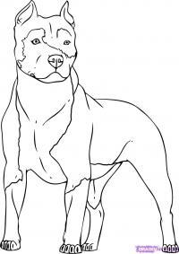 Как нарисовать собаку Питбуль карандашом поэтапно