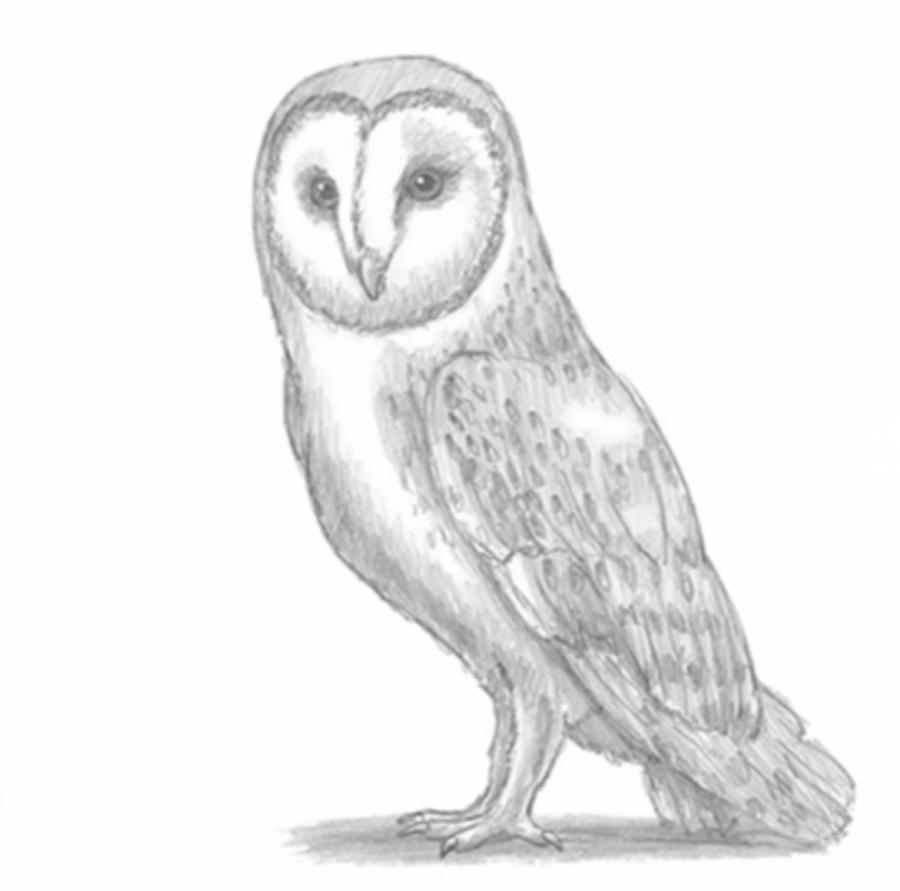 Рисуем сову - шаг 7