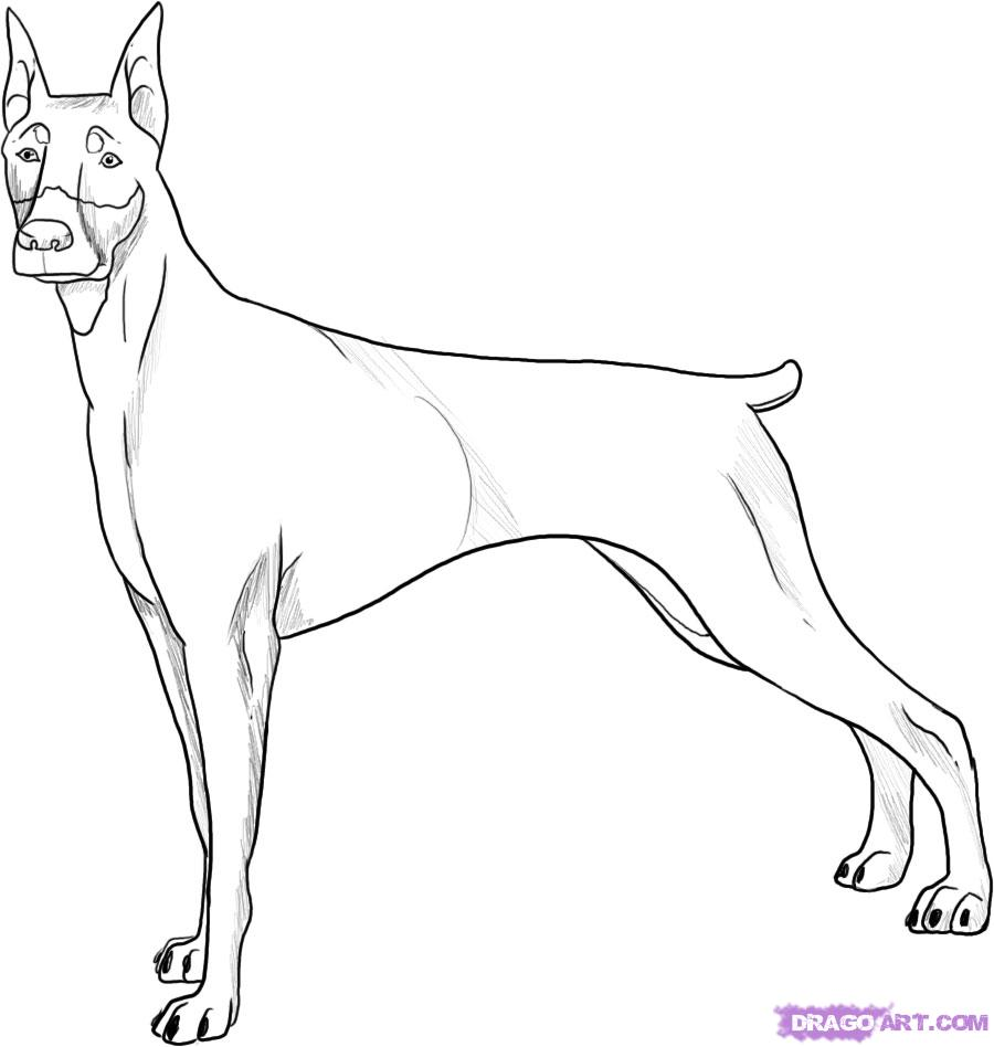 Рисуем собаку породы доберман - фото 5