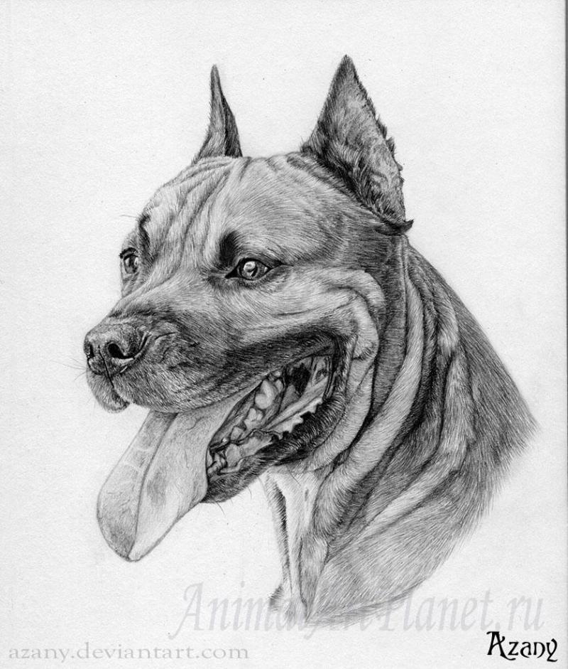 рисунки собак карандашом фото