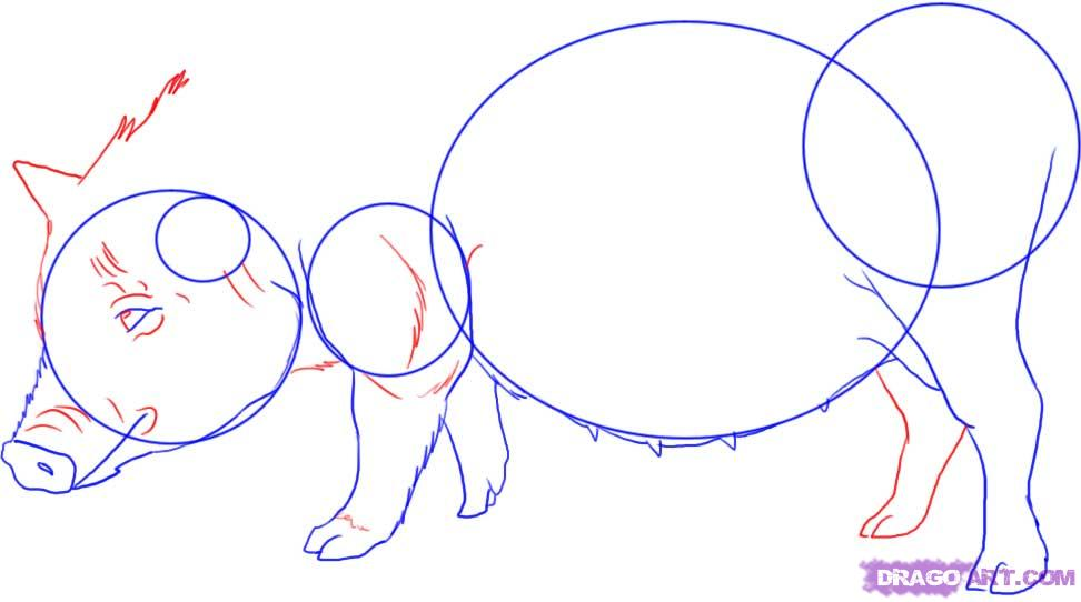 Как нарисовать свинью карандашом поэтапно