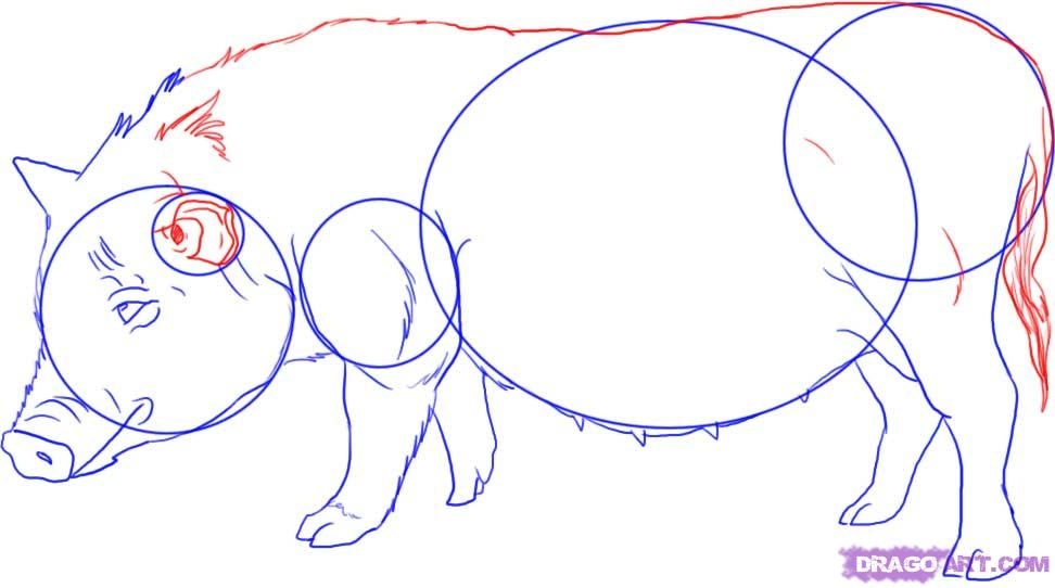 Рисуем свинью - фото 5