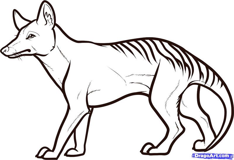 тигра карандашом поэтапно