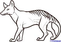 тасманского тигра карандашом