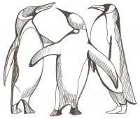 Фото трех пингвинов