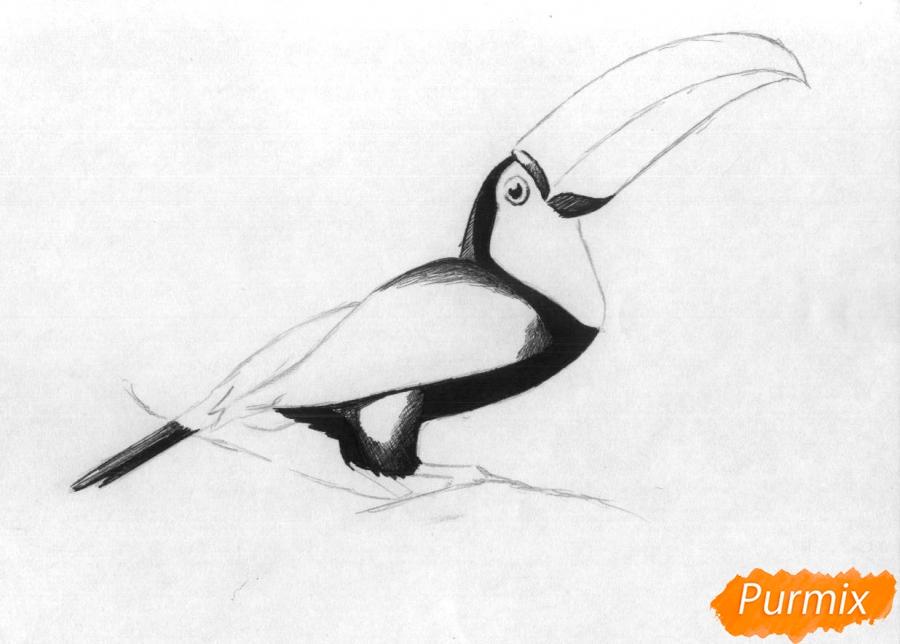 Рисуем тукана - фото 2