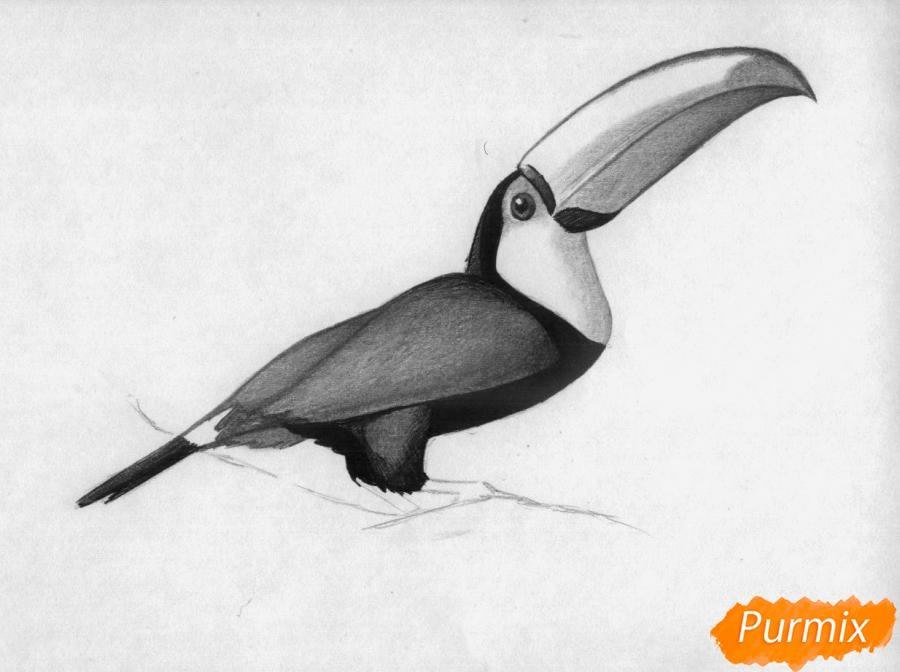 Рисуем тукана - фото 3