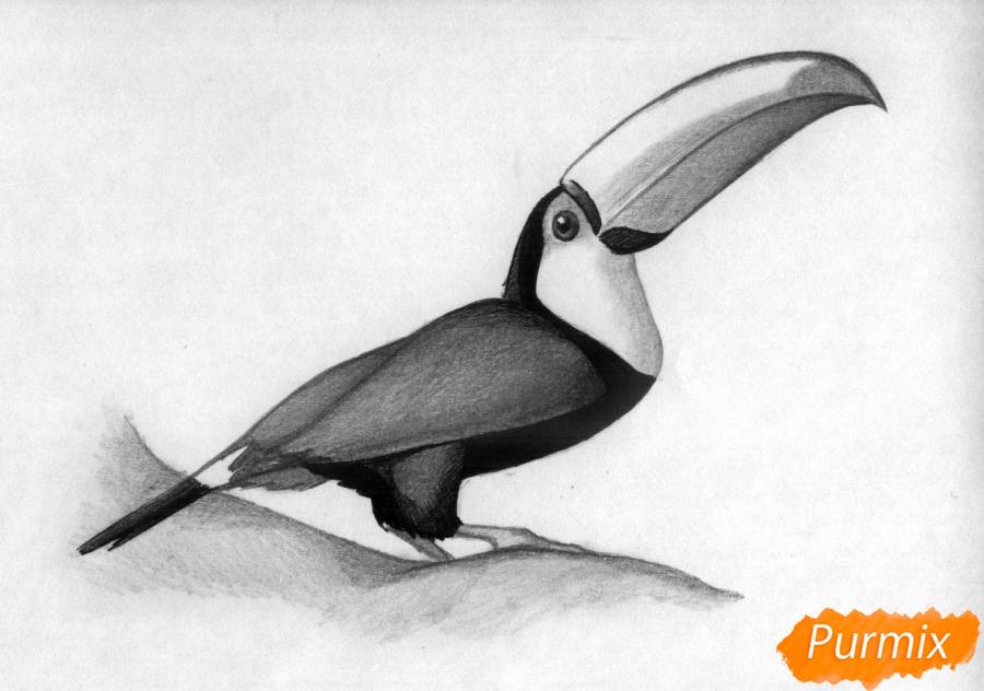 Рисуем тукана - фото 4