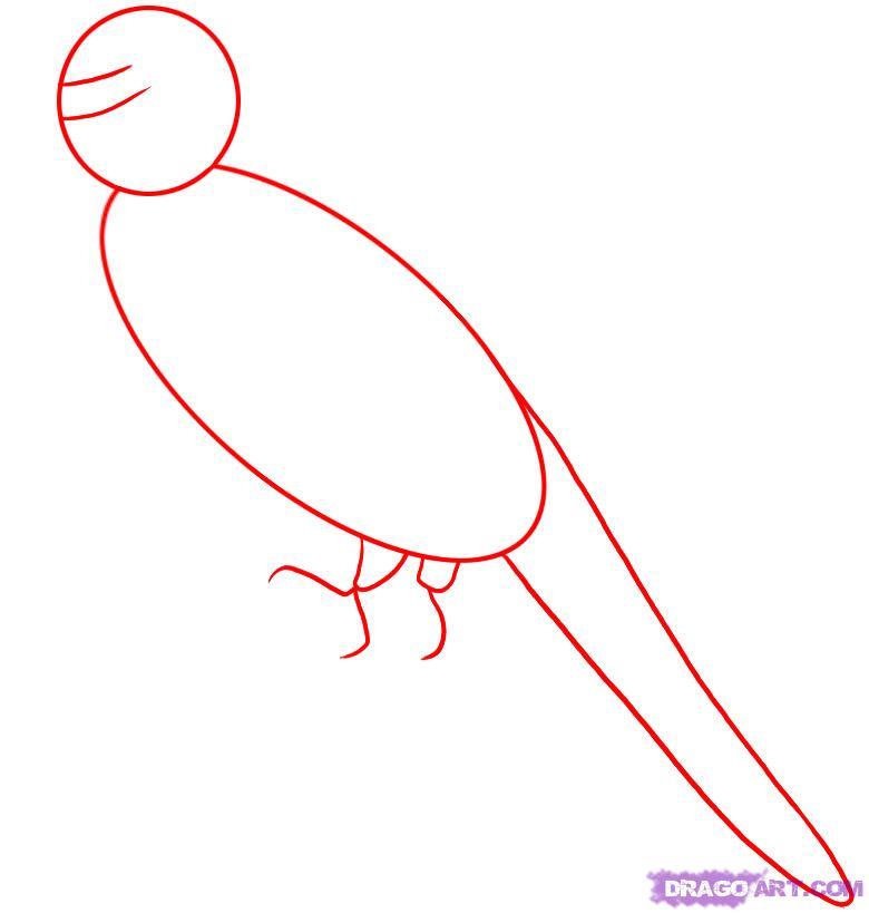 Рисуем волнистого попугая поэтапно