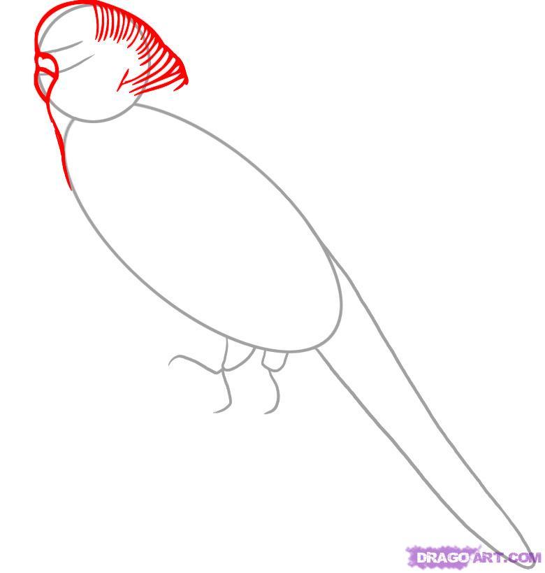 Рисуем волнистого попугая - шаг 2