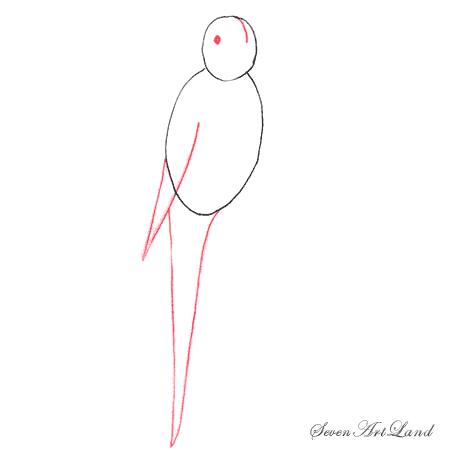 Как легко нарисовать волнистого попугая - шаг 2