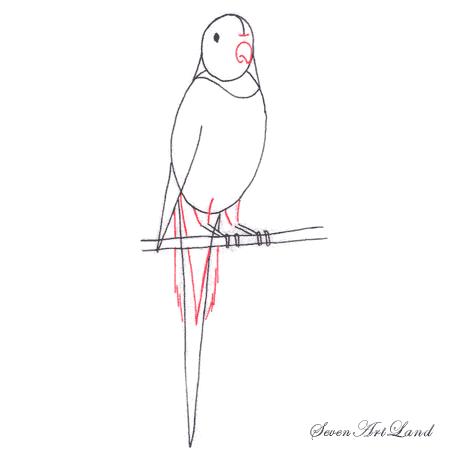 Как легко нарисовать волнистого попугая - шаг 4