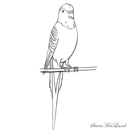 Рисунки попугаев поэтапно