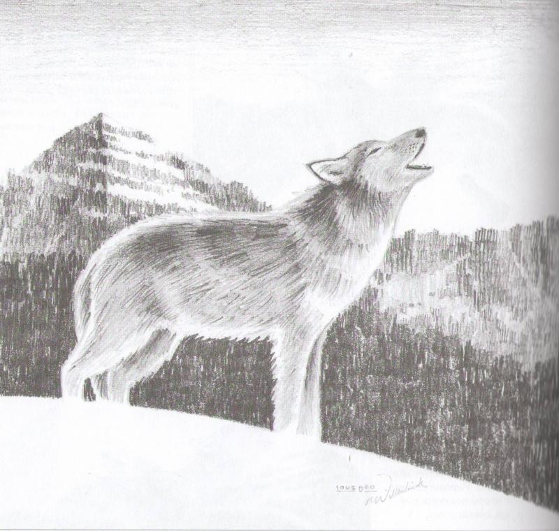 Картинки волка карандашом поэтапно