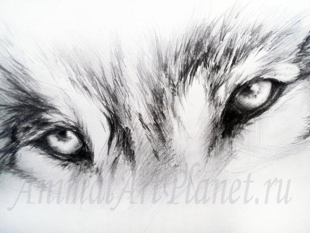 Рисуем взгляд волка простым