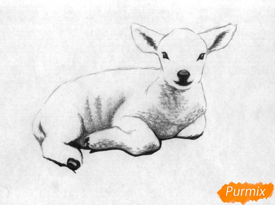 Рисуем ягнёнка простыми карандашами и чёрной ручкой - шаг 3